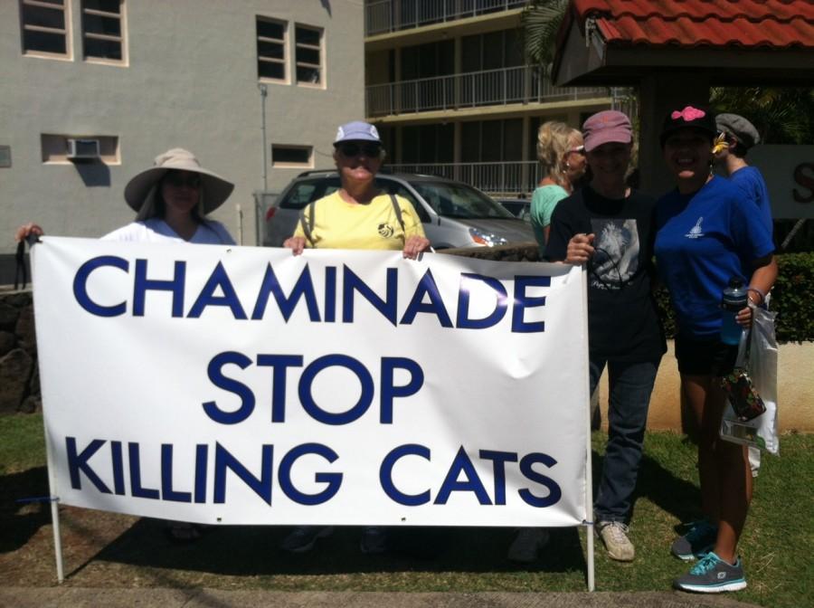 Killing+cats+or+saving+lives%3F