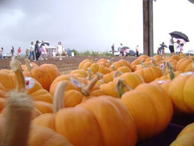 Go pumpkins!
