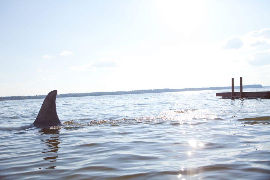 While sharks remain treacherous creatures, the ocean is their home.
