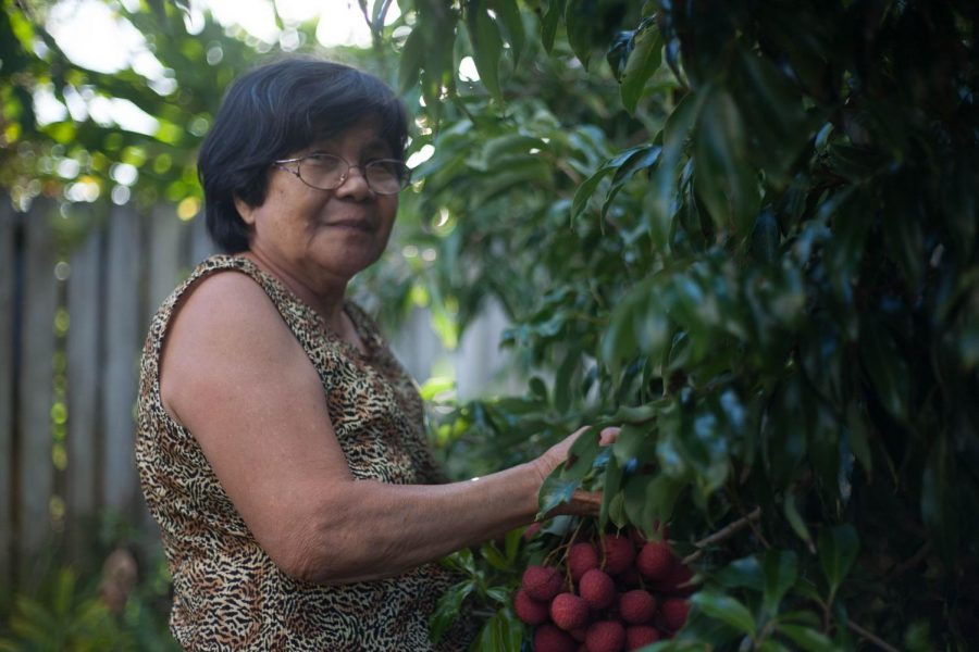 My Grandma, Segundina, picking lychee from the backyard.
