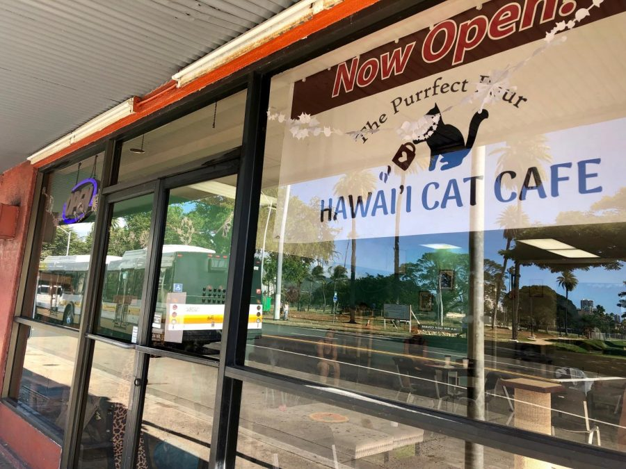 The+Hawaii+Cat+Cafe+is+located+in+Honolulu+at+415+Kapahulu+Ave.+between+First+Hawaiian+Bank+and+the+Texaco+gas+station.